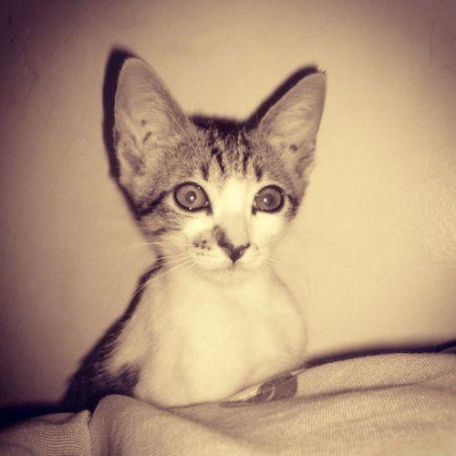 Ninica novinha... Cat Assustada Orelhas