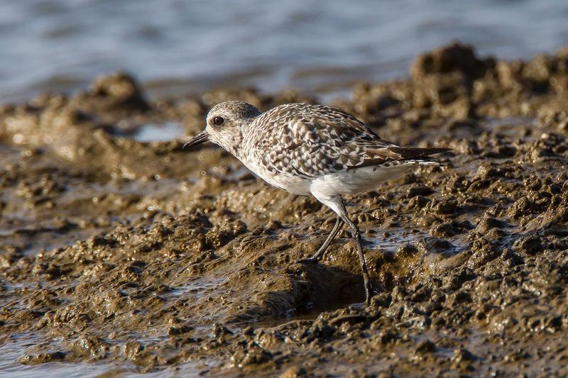Close-up of bird perching on wet rock at beach