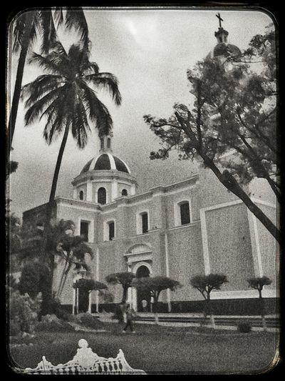 Allá viene la lluvia Architecture Built Structure Building Exterior Palm Tree Outdoors No People