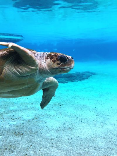 42 Wallaby Way, Sydney Nature Beautiful Aquarium Australia Gold Coast Sea World Animal Reptile Animal Wildlife Animal Themes Animals In The Wild Swimming Sea Turtle Water Underwater Sea Turtle Sea Life Turquoise Colored Marine