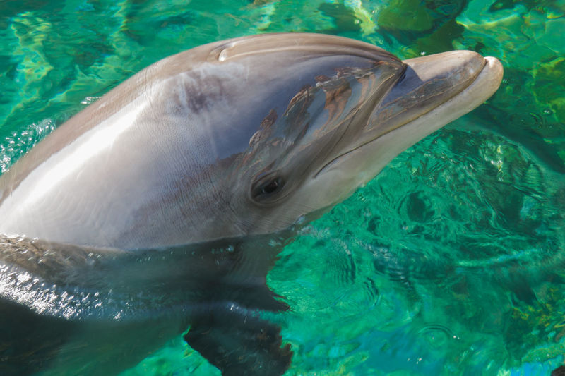 Close-up of  dolphin in sea