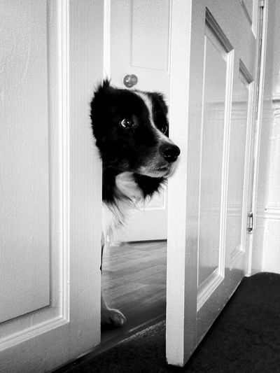 Dog Looking Through Open Door At Home
