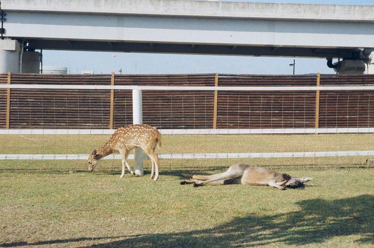 I'm gonna do nothing. Animal Themes Snapshot Film Xpro200 Oldlens Leica Japan