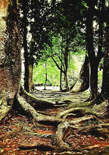 Mysteriously elegance Nature Trees Enjoying Nature INDONESIA TreePorn Wonderful Indonesia Indonesian_allshots