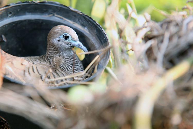 Bird One Animal Animal Photography Bird Photography Bird's Nest Bird In A Nest Bird In Nest