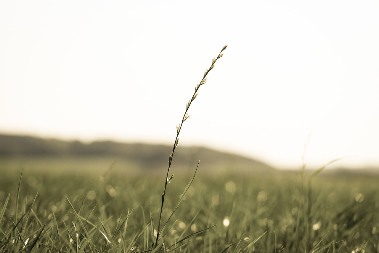 Beauty In Nature, Day, Focus On Foreground, Grass, Horizon Over Land