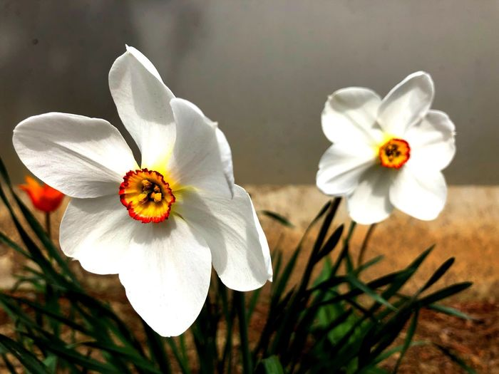 Spring Freshness Flower Flowering Plant Petal Fragility Plant Vulnerability  Inflorescence Close-up Flower Head Beauty In Nature Growth Focus On Foreground Pollen White Color Outdoors Nature Day No People Sunlight My Best Photo