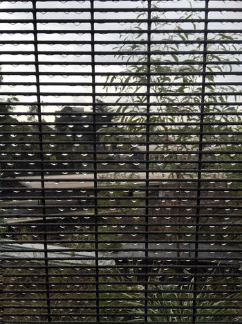 Droplets... Droplets Window Fence Patterns Rainy Days IPhoneography Frommypointofview