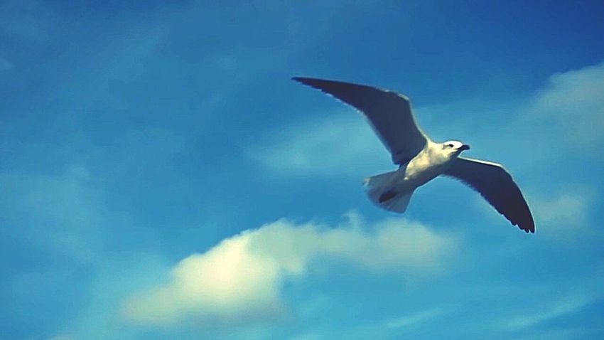 Nature Nature_collection Bird Photography Flying Bird Flying Seagull Sky_collection Sky Photography Animals The Great Outdoors - 2016 EyeEm Awards Need For Speed