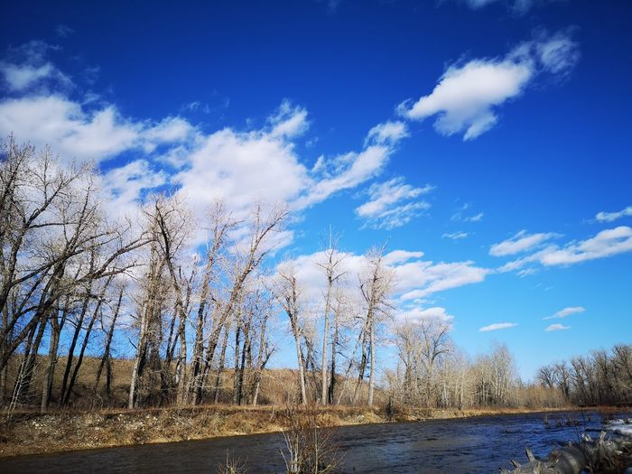 Scenic view of bare trees against blue sky