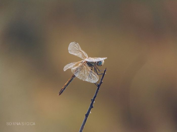 Libélula. #flying #Wings #insect #naturephotography #photography #Dragonfly #Out