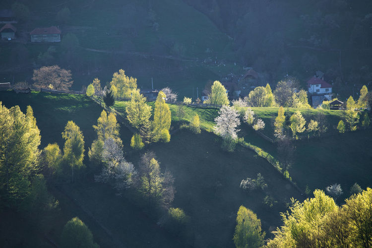 High angle view of trees by river