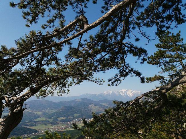 Gebirgsvereinssteig Hohe Wand 8.4.2017, 10:27, Via Ferrata View to Schneeberg, Austria Mountain Tree Mountain Peak No People Freshness Austria