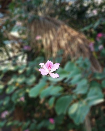 Flower Nature Petal Day Pink Color Fragility Plant