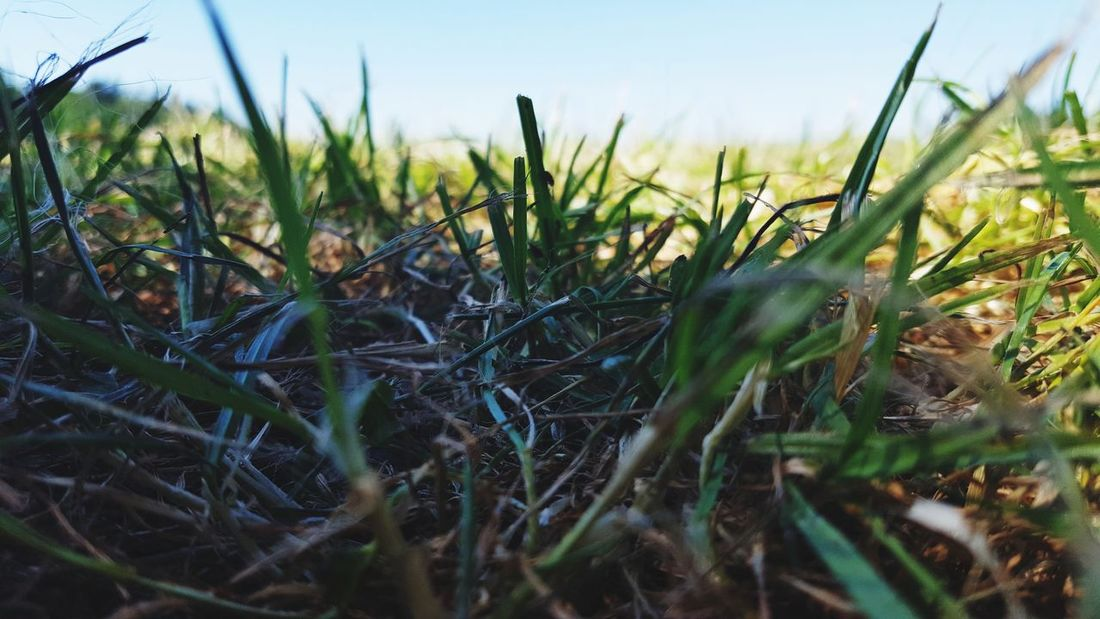 ☘ Plant Nature Growth Grass Outdoors Field No People Day Rural Scene Landscape Flower Sky Close-up Freshness