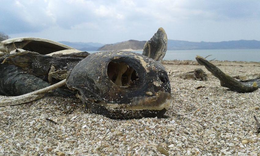 Esqueleto de tortuga Beach Sand Sky Nature Animal Head  Non-urban Scene Tortuga Turtlebeach Turtle 🐢 Turtle Corpse Cadaver