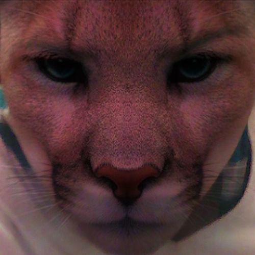 Soy un Puma