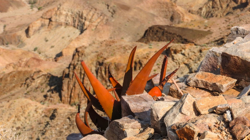 Views at Fish River Canyon, Namibia Fish River Canyon Canyon Plant Succulents Mountain Landscape Nature Tranquil Scene River Scenics Rocks Rock Formation Outdoors Geology Trail Namibia National Park Beauty In Nature