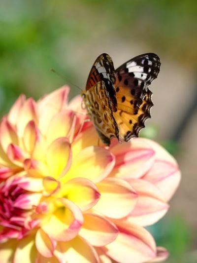 Daria Yellow Yellow Flower Natural EyeEm Nature Lover Naturelovers Nature_collection Flowers Nature Flower