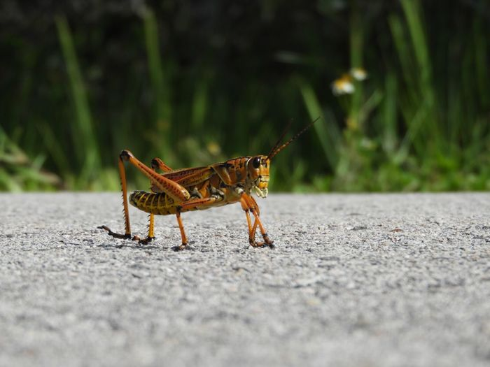 Close-up of insect on road