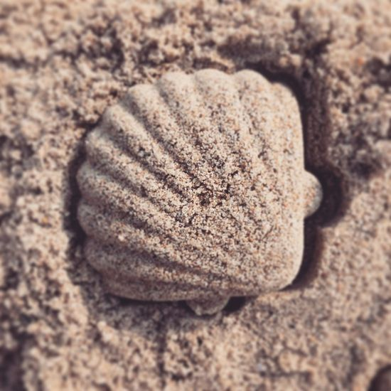 Sand Close-up Shell Summer Toy
