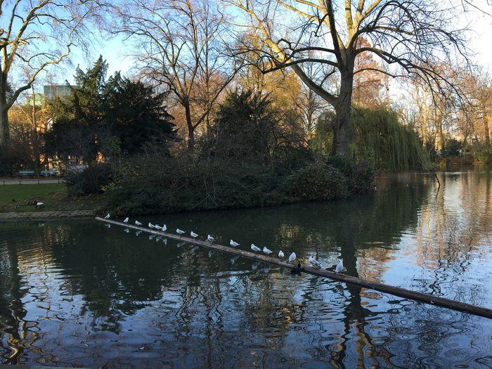 Enten See Düsseldorf Koenigsallee Breuniger Spaziergang Aufderstange Baum Blumen Park