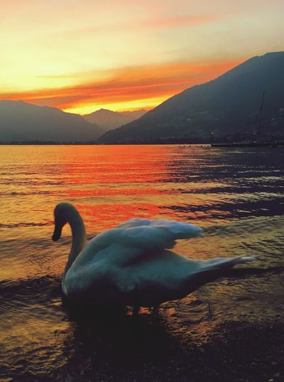 Sunset Water Sky Animal Themes Beauty In Nature Vertebrate Animals In The Wild Nature Bird No People Tranquility Tranquil Scene Lake