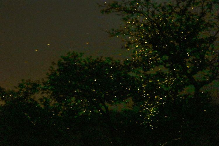 Fireflies EyeEm
