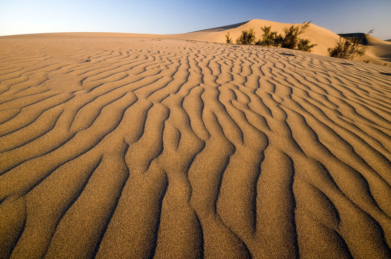 Dessert Fauna Dry Fauna Plants Lines Textures Maspalomas Canary Islands Sand Sand Dune Landscape Desert Arid Climate Scenics Nature Beauty In Nature No People
