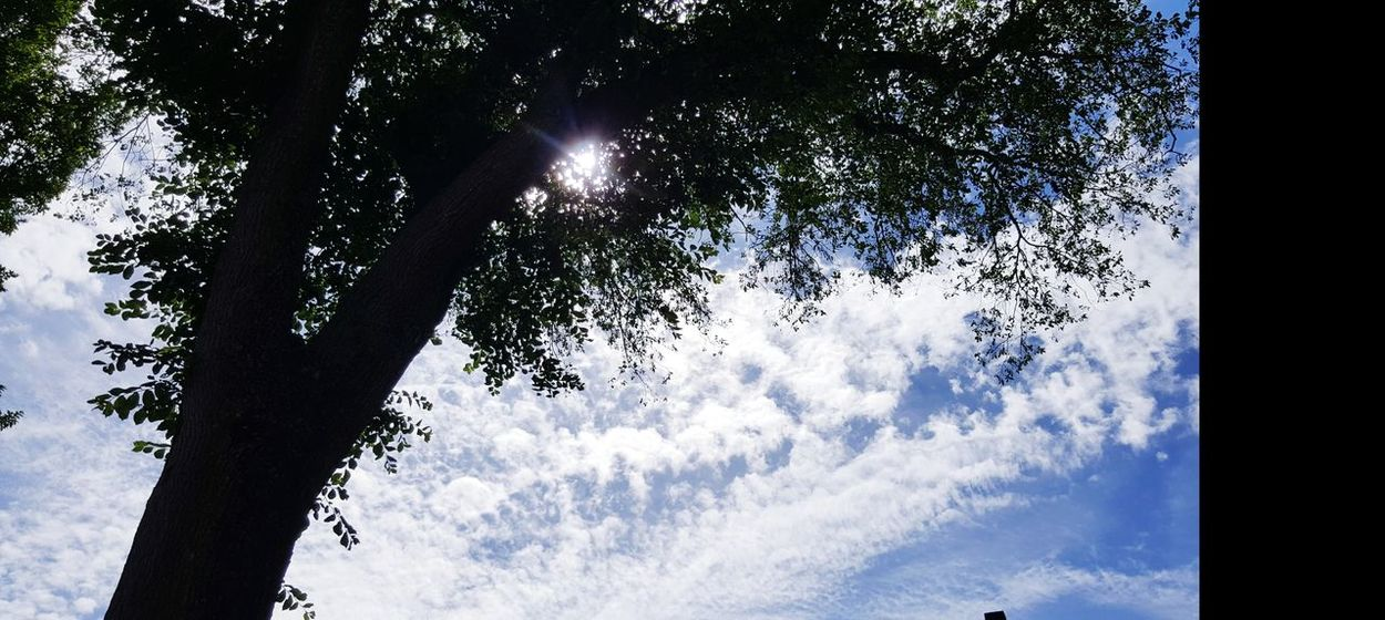 Tree Low Angle View No People Outdoors Nature Day Beauty In Nature Sky Clouds Clouds And Sky Clouds And Sun Feel Free To Follow ☺ I Will Follow Back