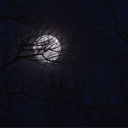 Wolf Moon Full Moon EyeEm Selects Bare Tree Tree Night Branch Silhouette Sky Outdoors No People Nature Astronomy