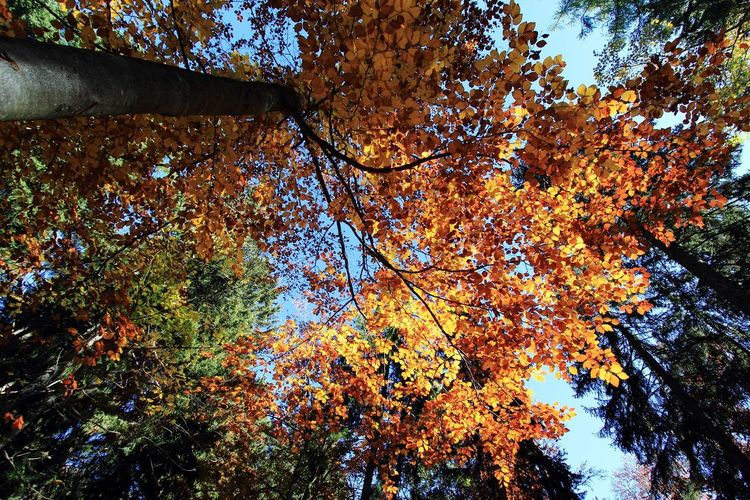 Autumn Beauty In Nature Branch Low Angle View Nature No People Outdoors Sky Tranquility Tree