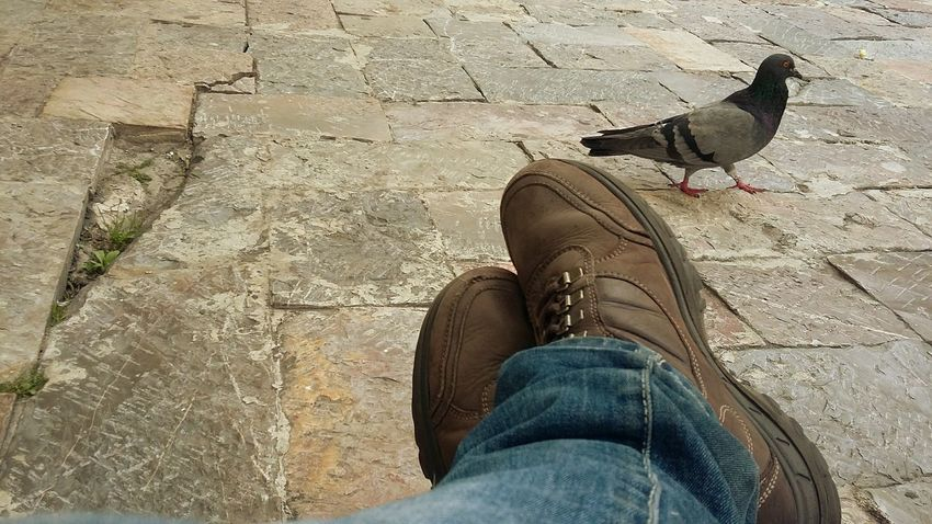 Taking Photos No Filter Check This Out Animals Dove Stone Floor Doves Beautiful Day