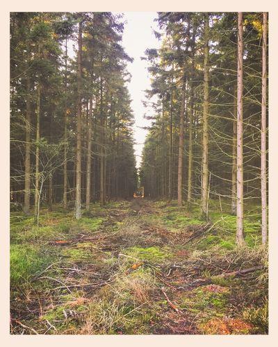 Walk Out For A Walk Nature Forest Green Evergreen Denmark Billund Sunshine