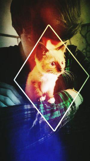 Pets Corner Hello World Luna❤ Kitty!