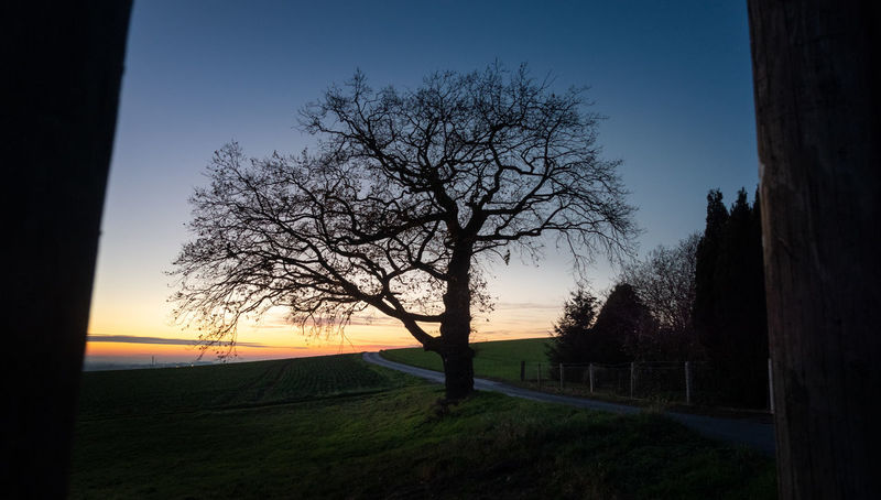 Tree Plant Sky Nature Field Sunset No People Scenics - Nature Tranquility Land Bare Tree Landscape Tranquil Scene Beauty In Nature Silhouette Environment Branch Clear Sky Grass Outdoors