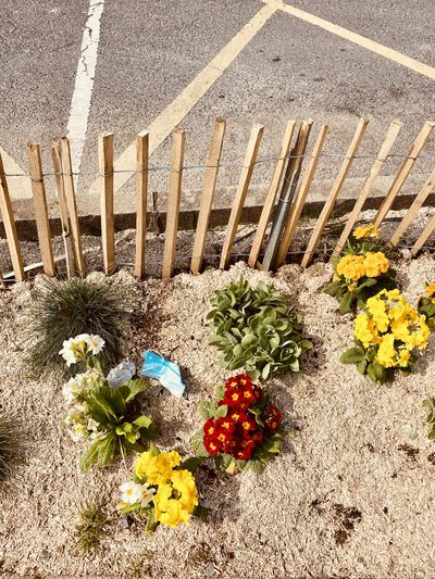 High angle view of flower pot on road