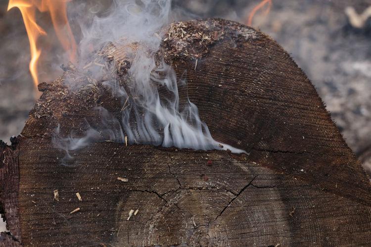 Close-up of bonfire on wooden log