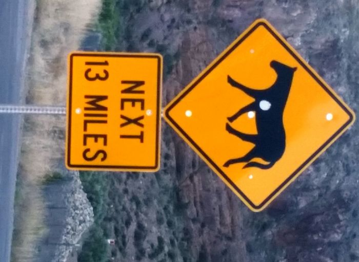 Caliente, CA Close-up Communication Day Guidance No People Outdoors Road Sign Warning Sign Water Wild Horses Yellow