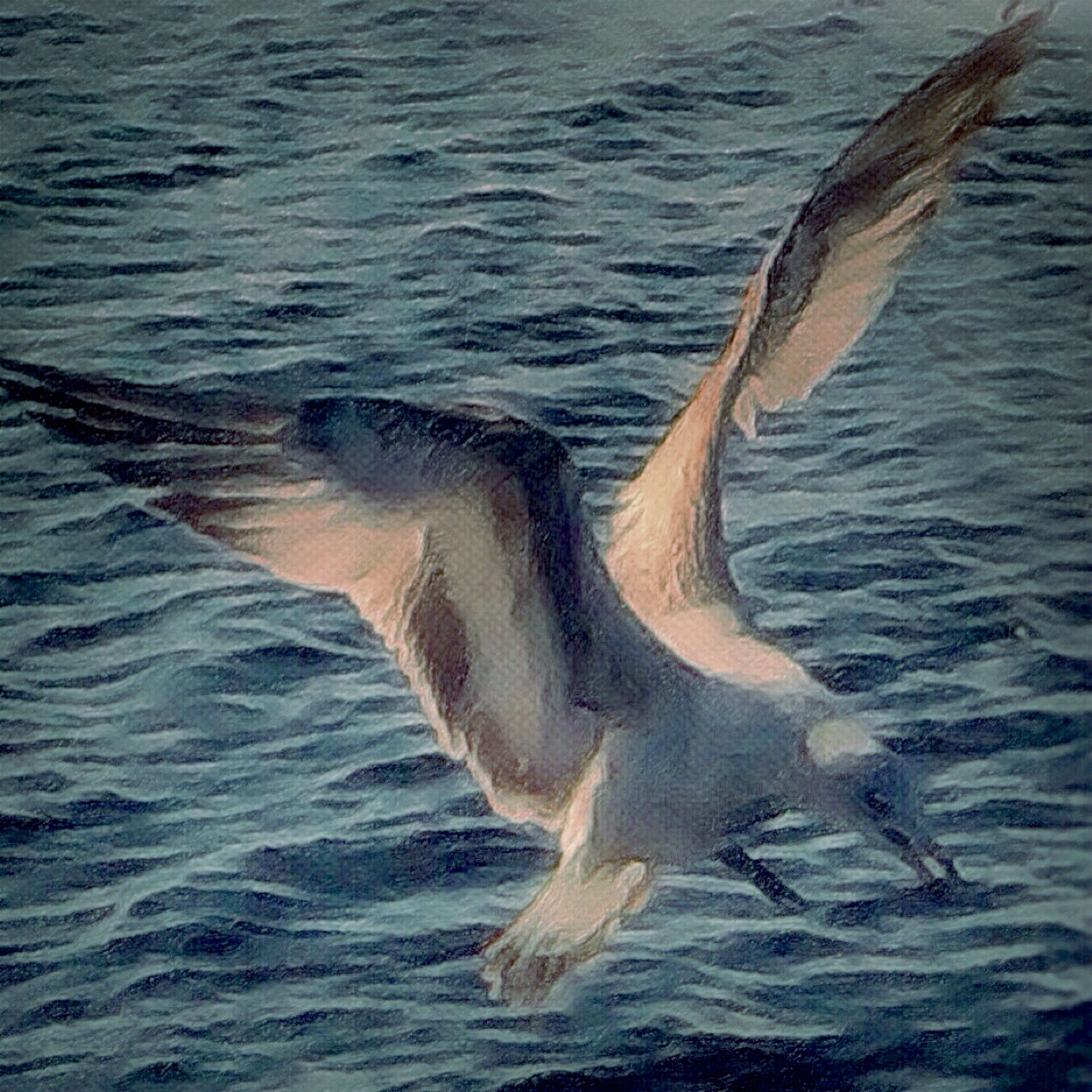 animal themes, animals in the wild, water, wildlife, one animal, bird, sea, spread wings, waterfront, rippled, swimming, sea life, nature, aquatic mammal, fish, motion, beauty in nature, seagull, flying, dolphin