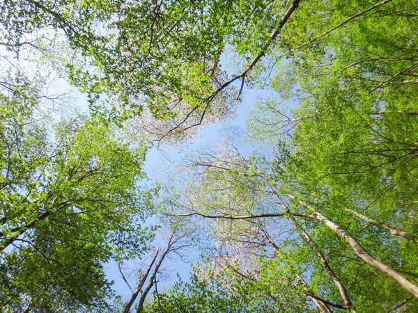新緑と山桜 EyeEmNewHere EyeEm Best Shots EyeEm Nature Lover Plant Tree Growth Nature Low Angle View Day No People Beauty In Nature Green Color Sky Forest