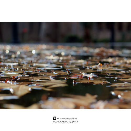 Autumn Leafs Fall Leaves Lens50 Feeling Good