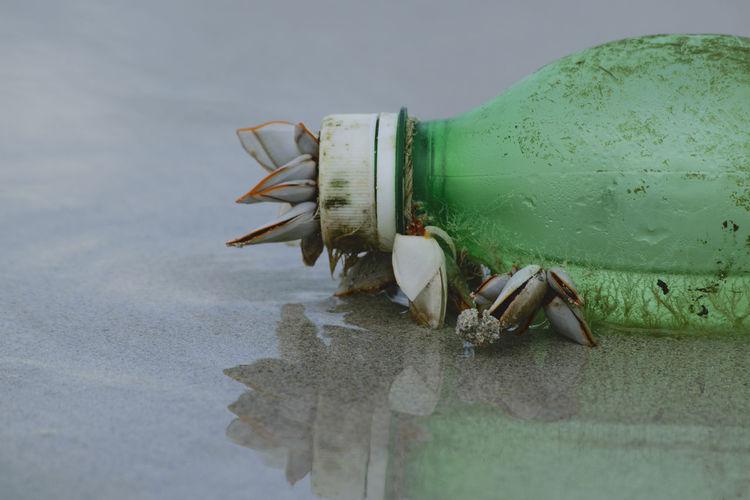 Close-up of sea shells on plastic bottle on sand