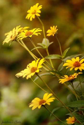 Wildflowers Yellow Flower Close-up Gold Colored No People Beauty Gold Outdoors Day Beauty In Nature Flower Head Nature Flowers Flowers, Nature And Beauty Some Editing Flower Photography Mypointofview Eye4photograghy Artistic Photography Softness Light Flowerpower