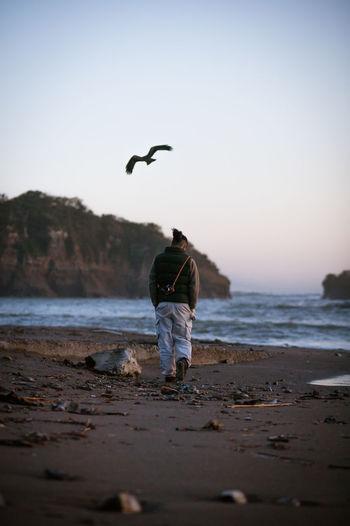 Showcase: January Man Walkingman Walking Around Sea Shore Snapshots Of Life Snapshot Atmospheric Mood Atmosphere Beach Walk Photography Waves, Ocean, Nature People Photography People From My Point Of View Kite Alone Bird