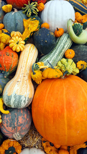 Fall or Autumn gourds Fall Beauty Fall Colors Autumn Backgrounds Choice Close Up Close-up Day Fall Fall_collection Food Food And Drink Food Photography Foodphotography Freshness Gourd Gourds Market No People Outdoors Pumpkin Squash - Vegetable Variation Vegetable Vegetables