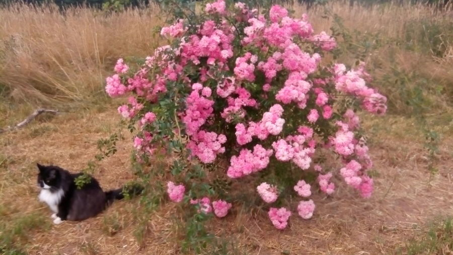 Flower Freshness In Bloom One Animal Outdoors Petal Pink Color Springtime