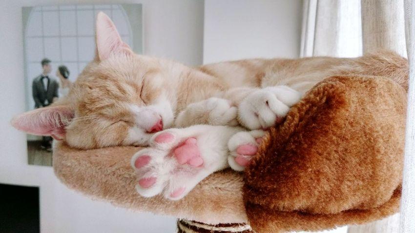 Domestic Cat Cat Catoftheday Photooftheday 貓 貓咪睡覺 喵星人 First Eyeem Photo
