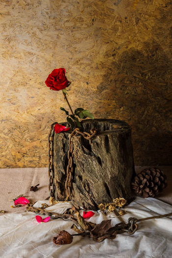 Red roses on dry deadwood and fetters with dark backgrounds are the dark side of love. Dark Side Dry Dead Hawks Dry Wither Abstract Art Art Chain Close-up Concept Flower Flower Head Fragility Freshness Indoors  Nature Old-fashioned Red Rose - Flower Symbols
