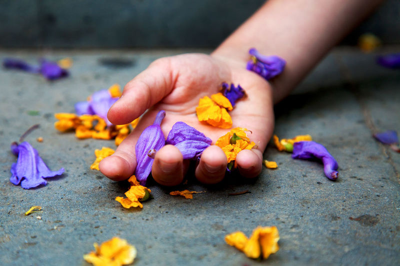 Boy's hand holding petals. Barcelona, Spain Boy Child Childhood Close-up Color Colour Of Life Horizontal Human Body Part Human Hand Petals Poetic Purple Real People Selective Focus Senses Yellow
